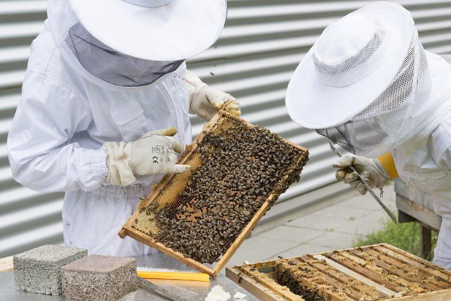 Mituri și adevăruri despre albine sau Tot ce nu știam despre albine